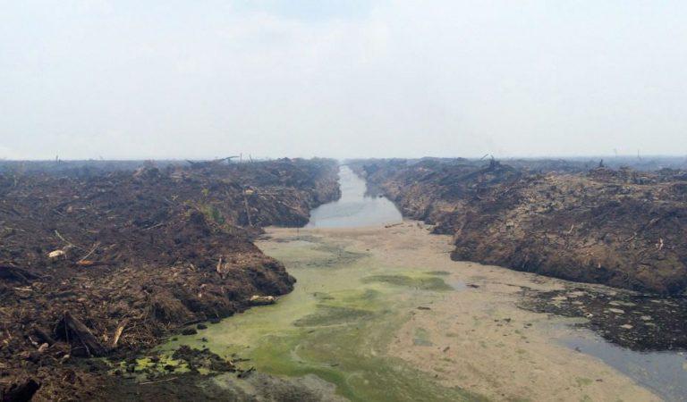 Pembiaran Kejahatan Lingkungan: Apa dan Bagaimana?